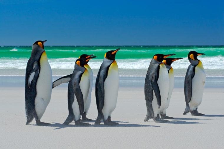 راهنمای کامل google Penguin