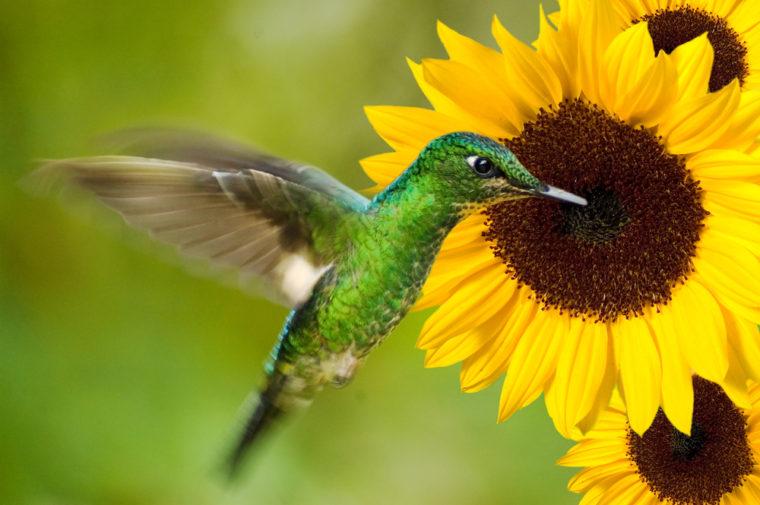 راهنمای کامل google Hummingbird