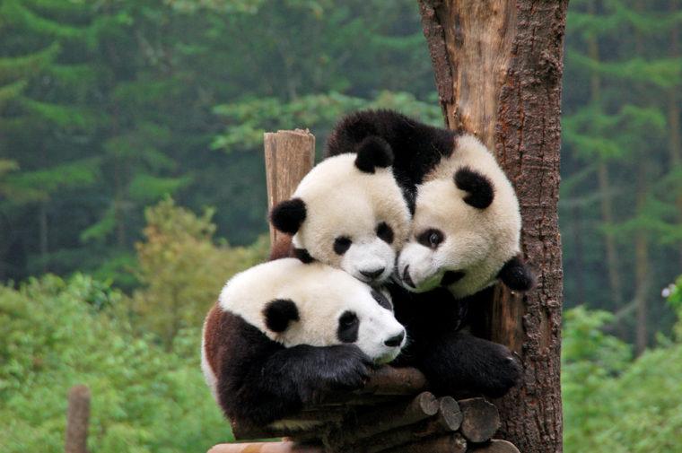 راهنمای کامل Google Panda